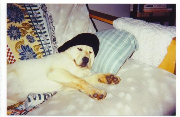 puppy beauty rest.