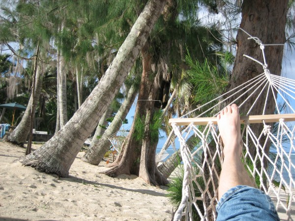 Favorite trees from Hammock