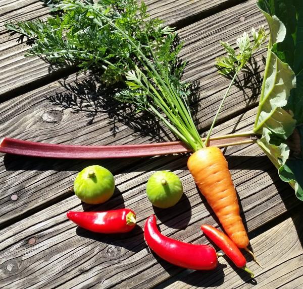 Figs, carrots, & rhubarb, too.