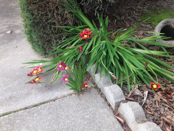 What kind of flowers/bulbs are these?