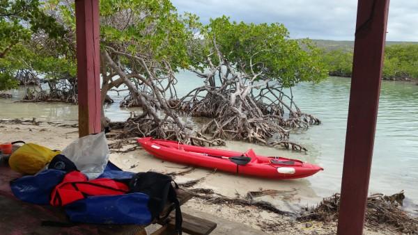 Nice Little Mangrove Island.