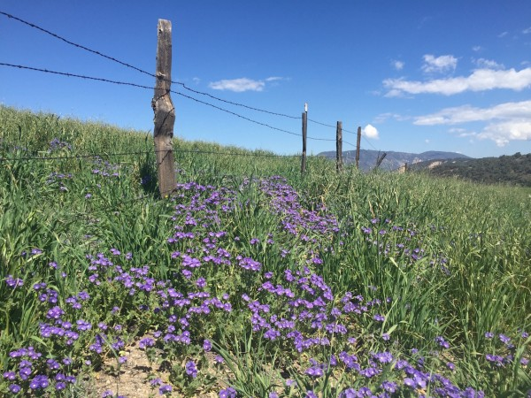 Along Hudson Ranch Road, Los Padres National Forest