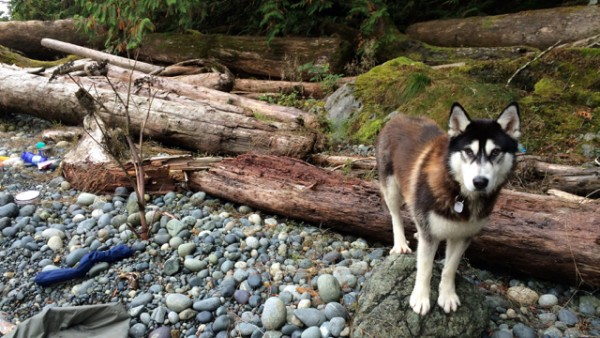 2.1 the nootka dog.