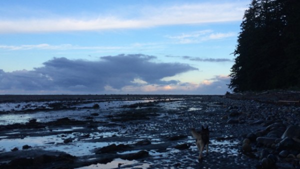4.1 following the nootka dog at daybreak.