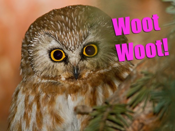 HBD from the Woot Owl!