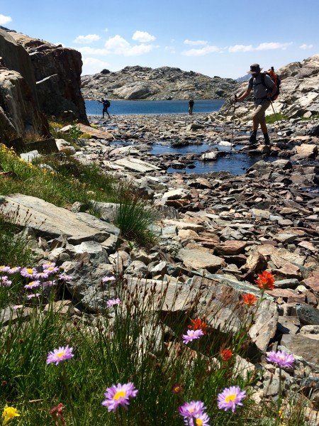 Wild flowers at nearly 12,000 feet on the way from Goddard Creek Canyo...