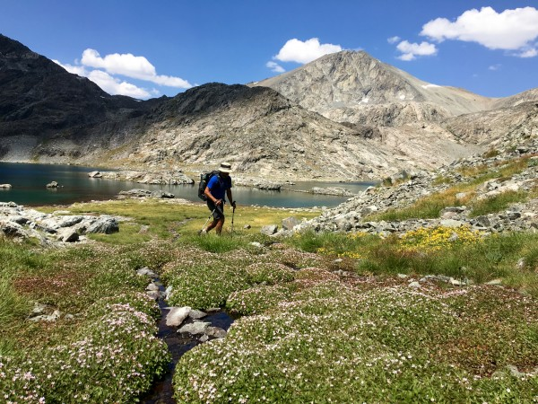 Wild flowers in the Ionian Basin at 12,000 feet.