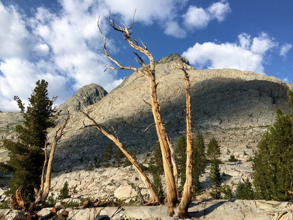 Cool tree at sunset on the east end of a lake in Goddard Creek Canyon ...