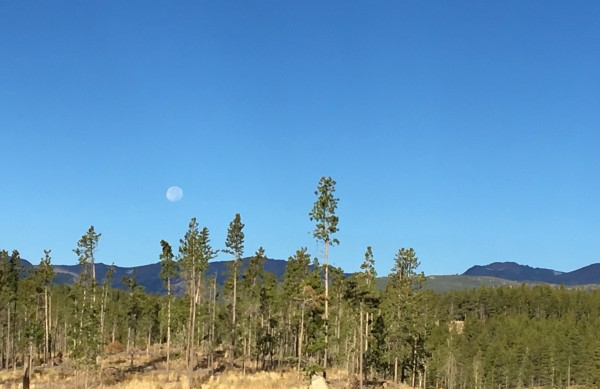 Morning moon over woods.