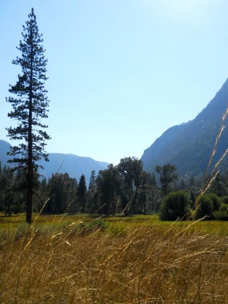 Simpson Meadow