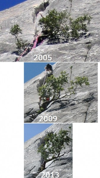 Sons of Yesterday - belay tree at end of first crux pitch