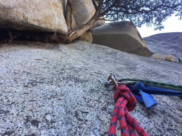 The 9th belay.  Trees on big walls are a wonderful reminder that life ...