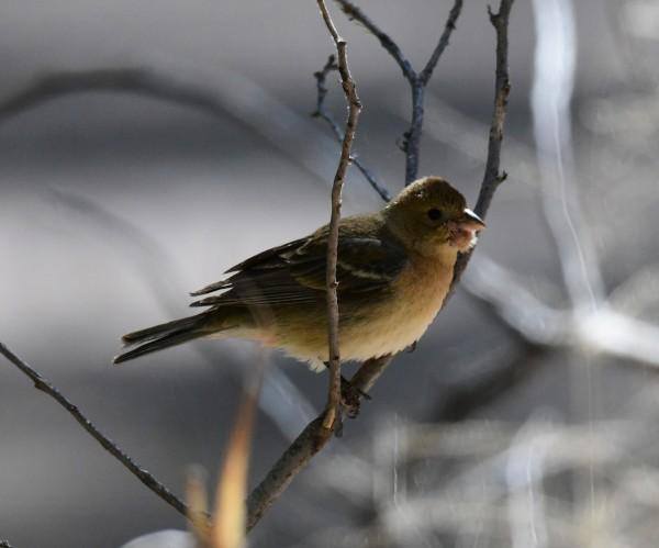 This little dude has a weird tumor (?) just below his beak, li...