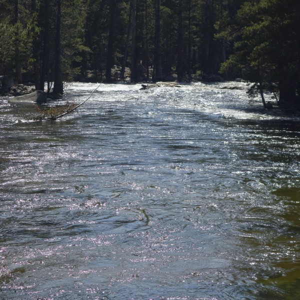 Tuolumne River near the Bridge, Friday, July 7.