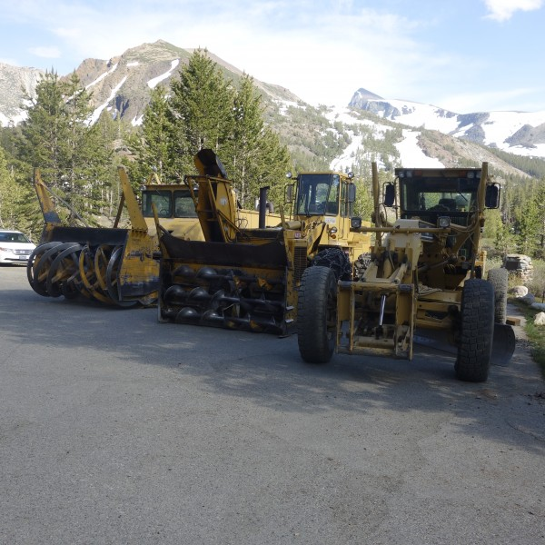These critters were parked by entrance to Saddlebag Lake Road. They ar...