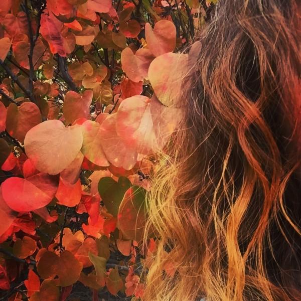 Naturally autumn colored curls 2017... El Portal, df's yard.  Xx