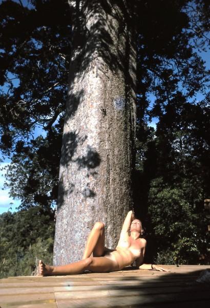NZ kauri tree.