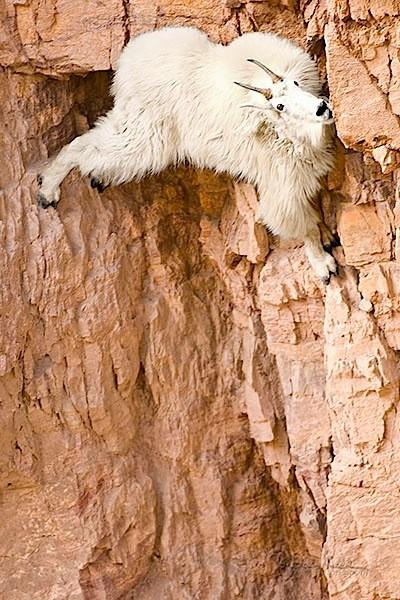 Ibex Rock Climbing Dam Ibex Climbing