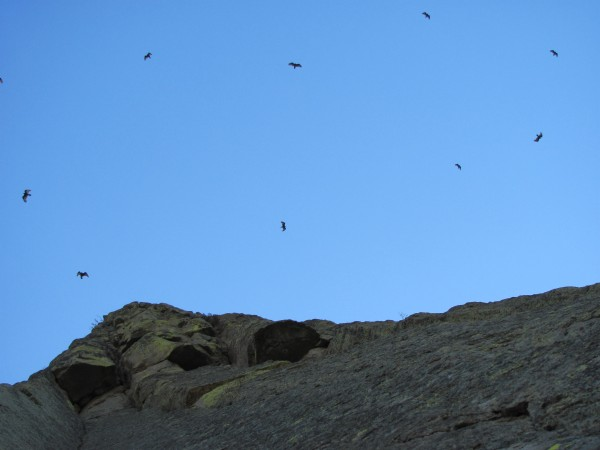 The vultures were out thinking they were going to get fed with all tha...