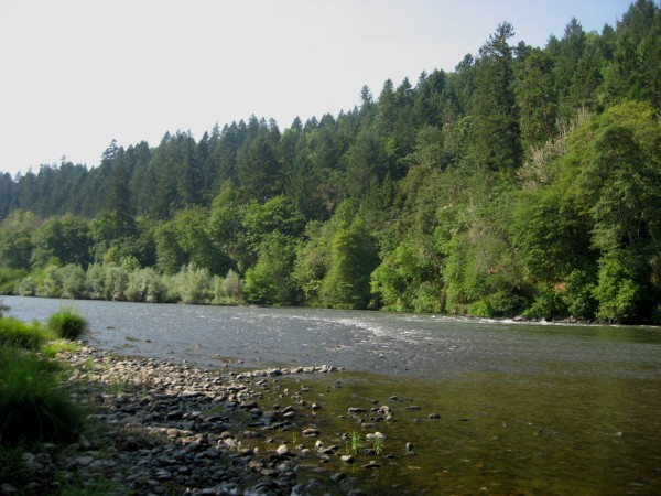 Rogue River from the shore at Doubletree Ranch.