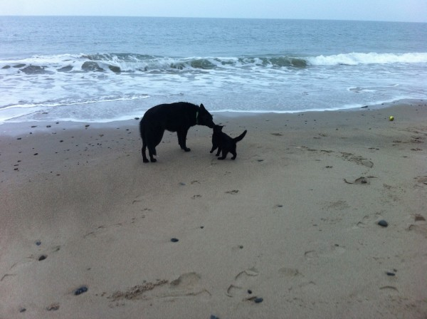 Aggie and Betty, Ballytrent Beach/Strand, 70 meters from the house