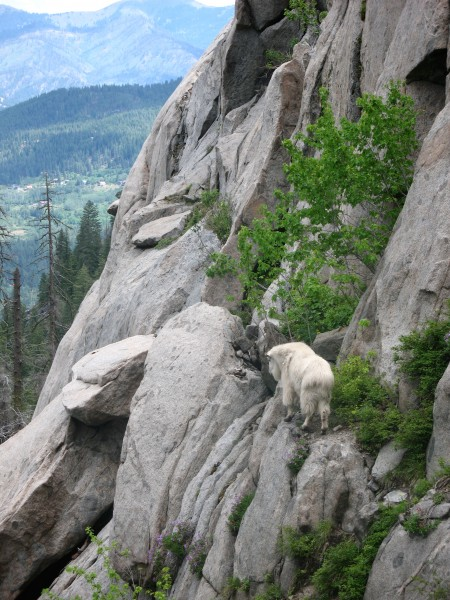 Lester on a ledge partway up some route he free soloed.