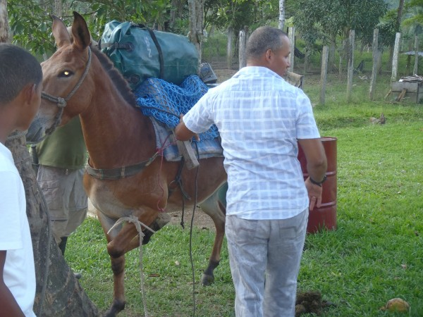 Our rank mule, note tied foot to keep still while packing