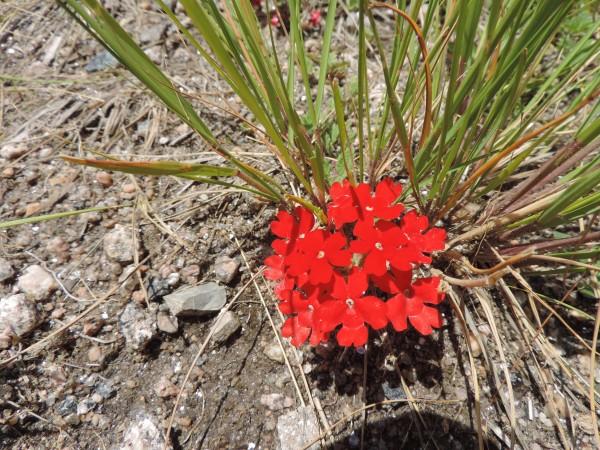 Plantitas en las sierras de Córdoba