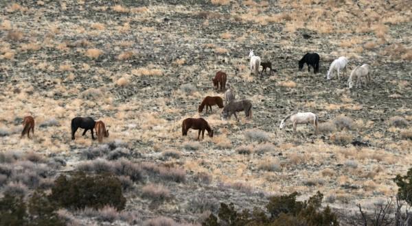 Herd +1