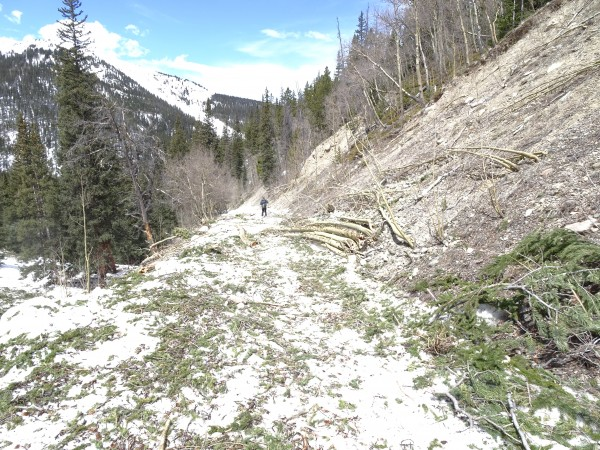 Huge amount of avalanche debris at the bottom on Huntsman gultch on th...
