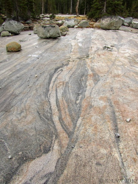 Modal layering in Half Dome Granodiorite and glacial erratics (wet...