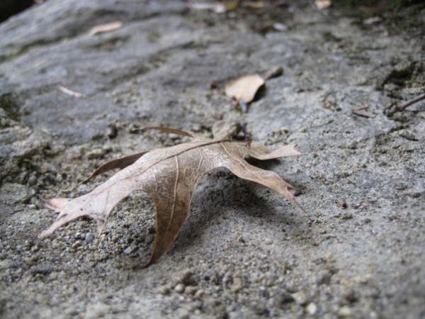 Leaf (duh)
