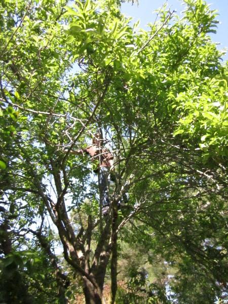 arboreal ape boy