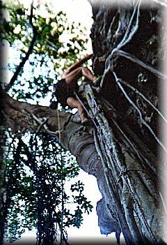 Tarzan In Thailand 5.9