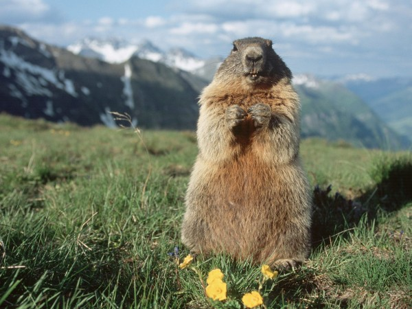 "OT Marmot sez ""Please join me for lunch until this gets back On Topic!..."