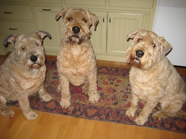Sheba, Gus & Ginger