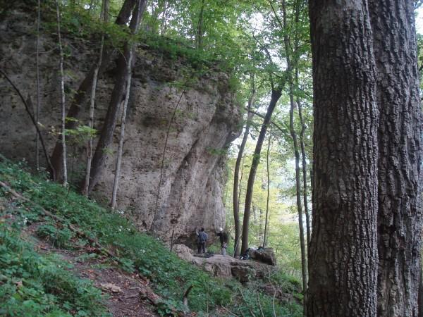 Wild Iowa wall