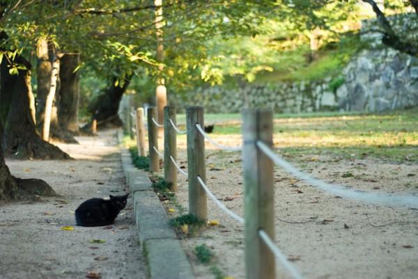 Himeji Castle cat.