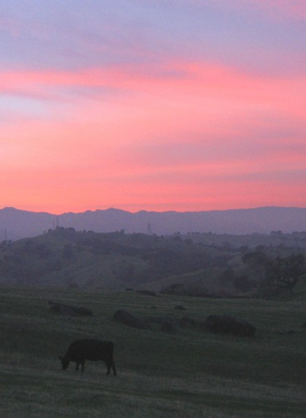 Vacaville Pink Cow Sunset